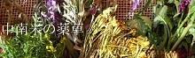 ブログ:「中南米の薬草」  趣味で調査している記録です。